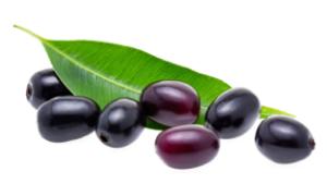 Früchte des Jambulbaums
